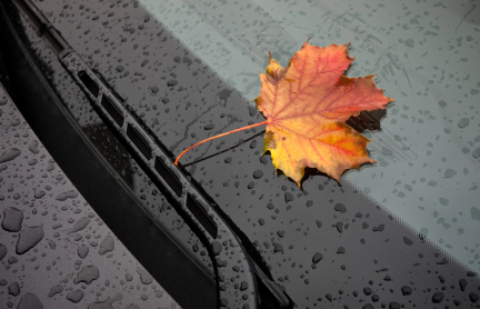 Leaves on Your Car