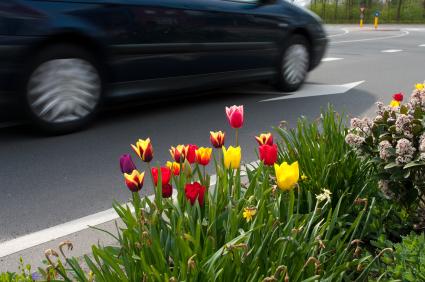 Spring Car Maintenance
