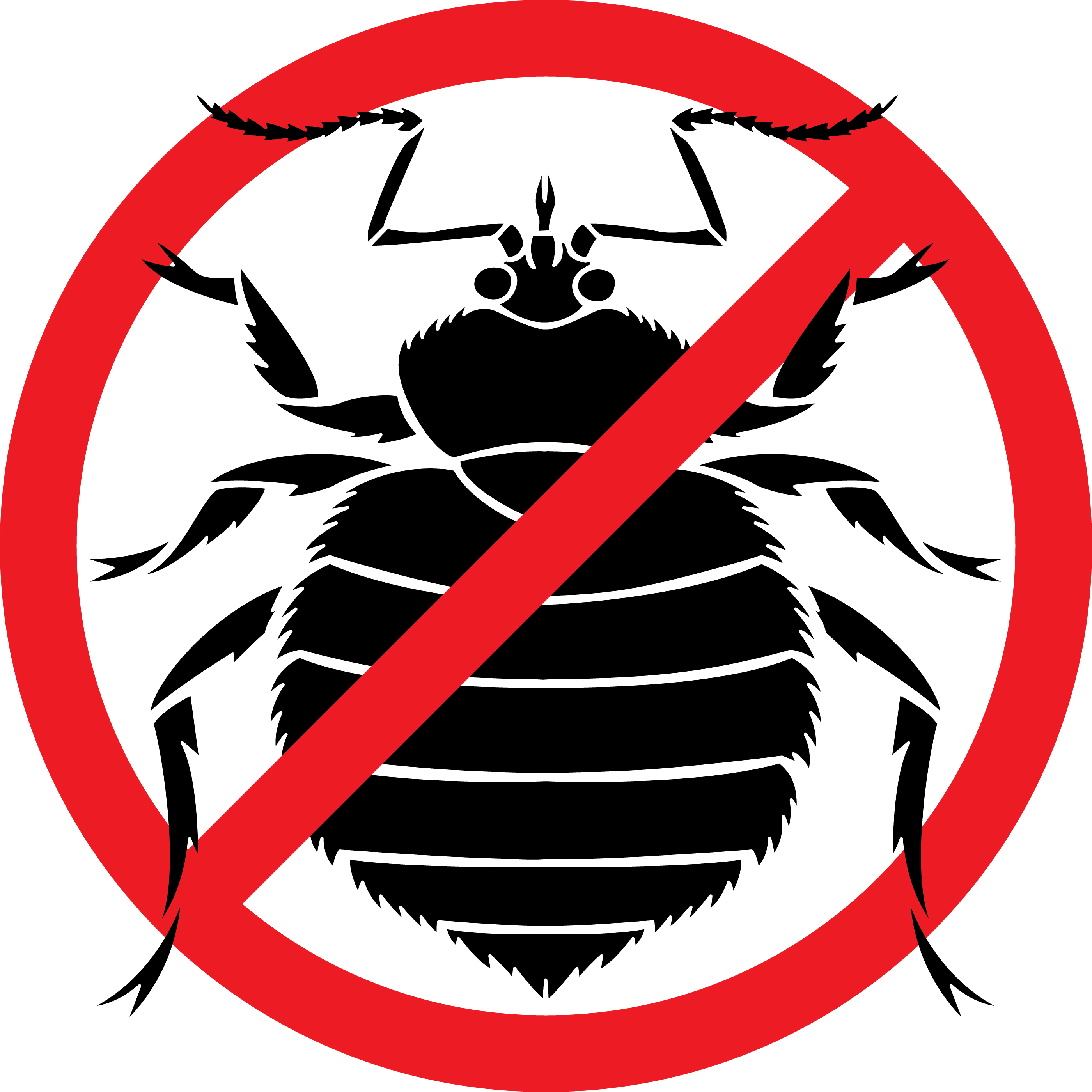 No Bedbugs